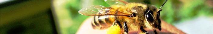 Радость моя пчёлка 2